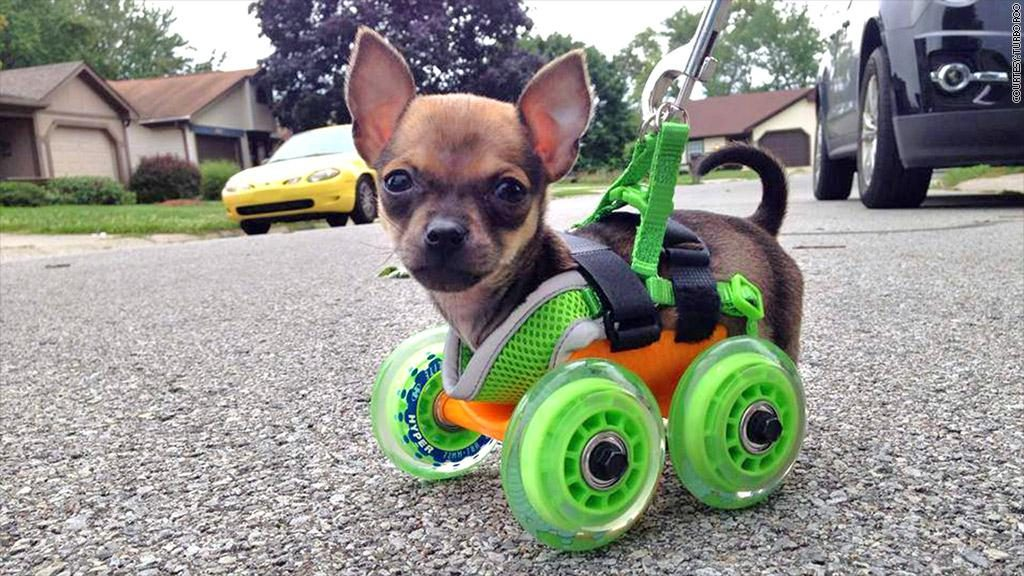 3d-printed-puppy-wheelchair